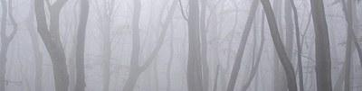 nebel-bandeau.jpg