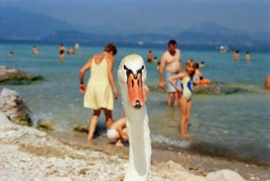 Italie. Lac de Garde. Bords du lac. 1999 © Martin Parr / Magnum Photos