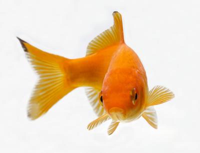 esp poisson d'avril