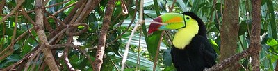 toucan_small.jpg