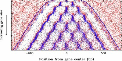 ljc_yeast_gene_chromatin.jpg