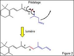 Proteine-spectroscopie_fig-2.jpg