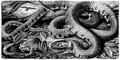serpente.png